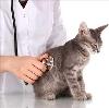 Ветеринарные клиники в Клязьме